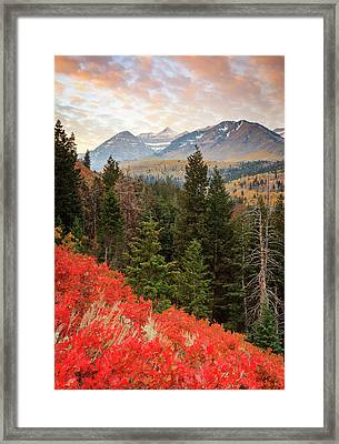 Red Oak Vertical Framed Print