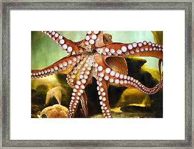 Red Octopus Framed Print by Marilyn Hunt