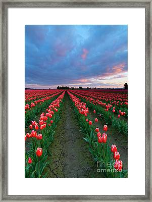 Red On Red Framed Print by Mike Dawson
