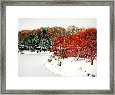 Red On White Framed Print by Diana Angstadt