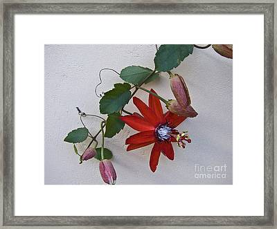 Red On White Framed Print by Heiko Koehrer-Wagner