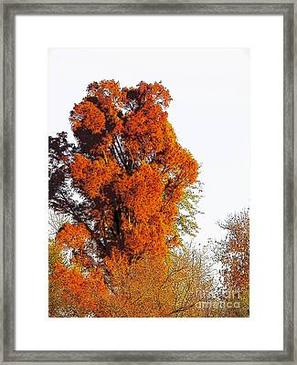 Red-orange Fall Tree Framed Print