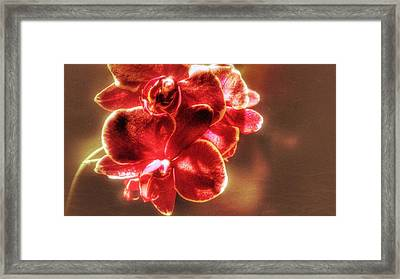 Framed Print featuring the photograph Red Orchid by Isabella F Abbie Shores FRSA