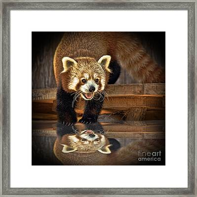 Red Panda Altered Version Framed Print