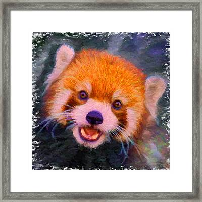 Red Panda Cub Framed Print by Caito Junqueira