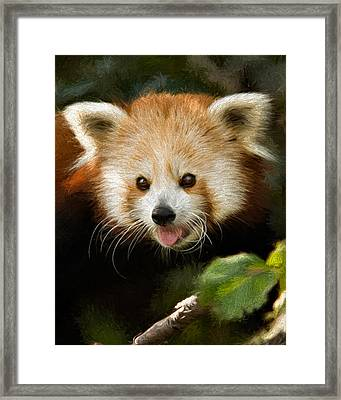 Red Panda Framed Print by Lana Trussell