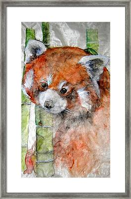 Red Panda Portrait Framed Print