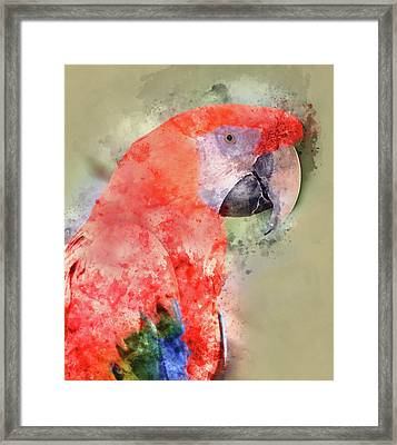 Red Parrot Digital Watercolor On Photograph Framed Print by Brandon Bourdages