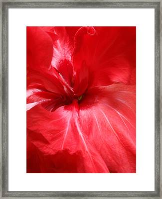 Red Passion 2 Framed Print by Valia Bradshaw