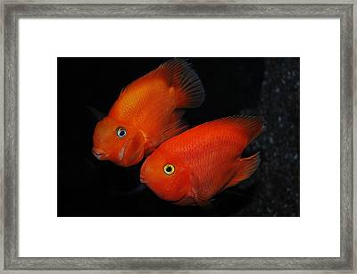 Red Passion Framed Print by Alessandro Matarazzo