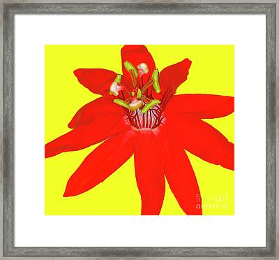 Red Passion Flower Framed Print by Edita De Lima
