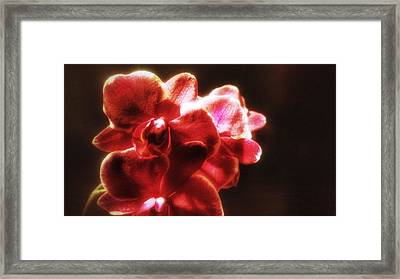 Framed Print featuring the photograph Red Phalaenopsis by Isabella F Abbie Shores FRSA
