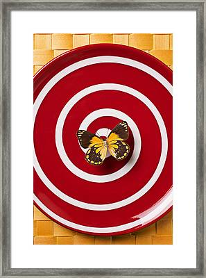Red Plate And Yellow Black Butterfly Framed Print by Garry Gay