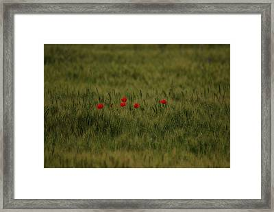 Red Poppies In Meadow Framed Print