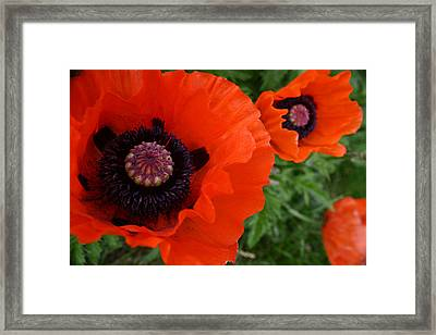 Red Poppies Framed Print by Lynne Guimond Sabean