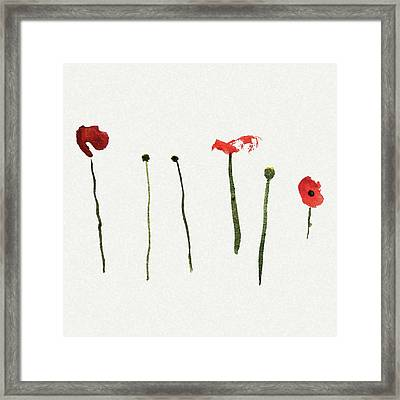 Red Poppies Framed Print by Stephanie Peters