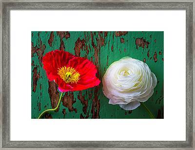 Red Poppy And White Ranunculus Framed Print by Garry Gay