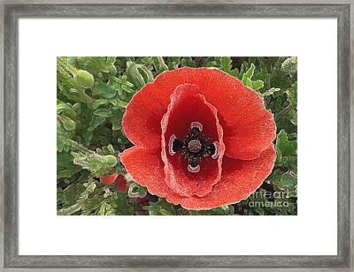 Framed Print featuring the photograph Red Poppy Flower 2 by Jean Bernard Roussilhe