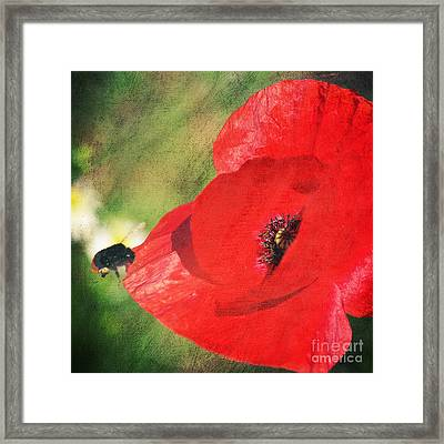 Red Poppy Impression Framed Print by Angela Doelling AD DESIGN Photo and PhotoArt
