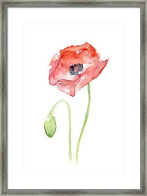 Red Poppy Framed Print by Olga Shvartsur