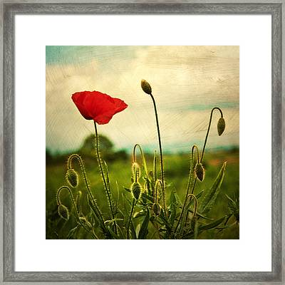Red Poppy Framed Print by Violet Gray