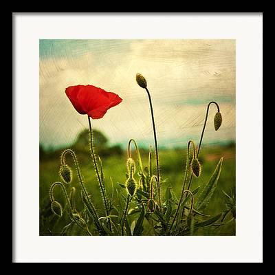 Red Bud Framed Prints