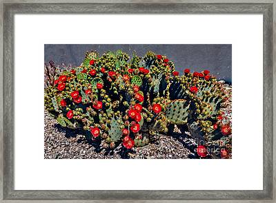 Red Prickly Pear Cactus Framed Print by Robert Bales