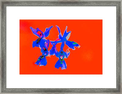 Red Provence Orchid Framed Print