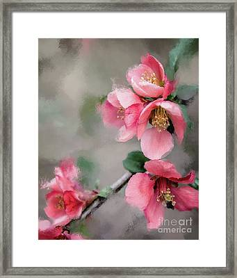 Red Quince Framed Print by Anita Faye