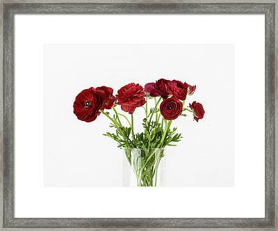 Framed Print featuring the photograph Red Ranunculus by Kim Hojnacki