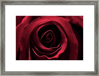 Red Red Rose 2 Framed Print by Sheryl Thomas
