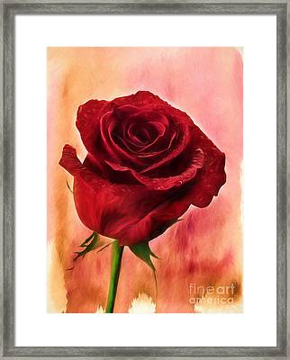 Red Red Rose Framed Print by Darren Fisher