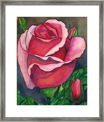 Red Red Rose Framed Print by Robert Thomaston