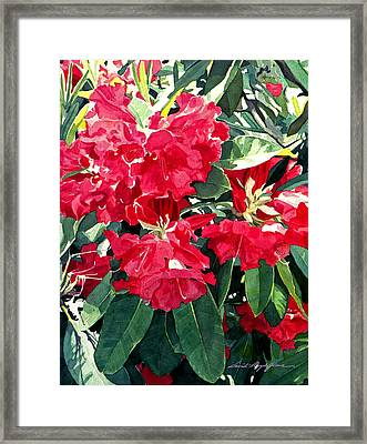 Red Rhododendrons Of Dundarave Framed Print by David Lloyd Glover