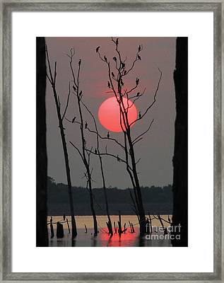Red Rise Cormorants Framed Print by Roger Becker