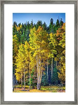 Red River Aspens Framed Print