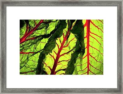 Red River Framed Print by Bobby Villapando