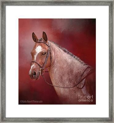 Red Roan Framed Print