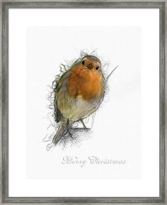 Red Robin Framed Print by Gillian Singleton