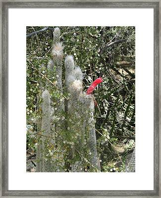 What A Rude Cactus Framed Print
