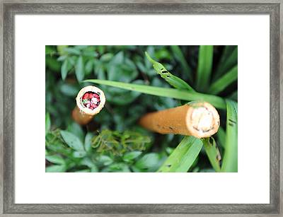 Red Rocks In A Bamboo Stick Framed Print by Jessica Rose