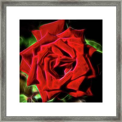 Red Rose 1a Framed Print