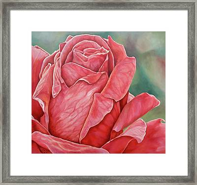 Red Rose 93 Framed Print