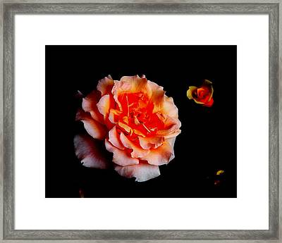 Red Rose And Bud Framed Print by Gaynor Perkins