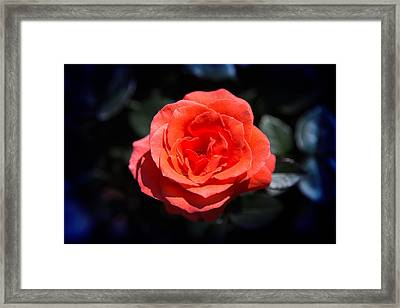 Red Rose Art Framed Print