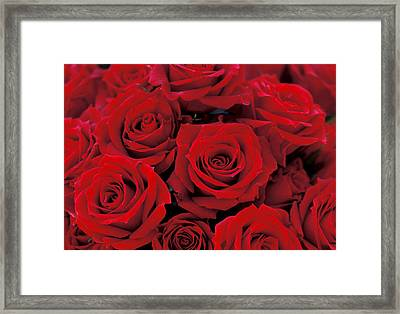 Red Rose Bouquet Framed Print by Kathy Yates