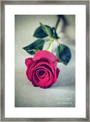 Red Rose Framed Print by Carlos Caetano