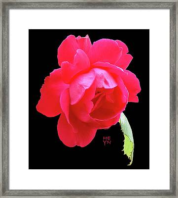 Red Rose Cutout Framed Print