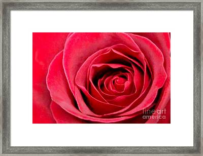Framed Print featuring the photograph Red Rose by DJ Florek