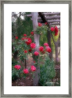 Red Rose Dream Framed Print